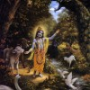 With Krsna in the Peaceable Kingdom