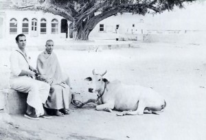 Acutuananda Swami in India with cow, 1973