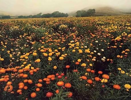 Flowers in spirng