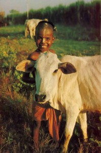 Young Boy with cow in Indian Village, 1976.