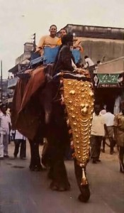 ISKCON Devotee Riding on Elephant in Hyderabad 1977