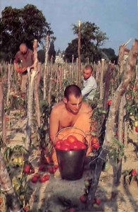 Vegetables, grains, and fruit of all kinds grew in abundance on ISKCON farms - 1977