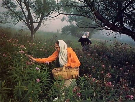 Mother Rupa and Mother Amrtaprada pick wildflowers for the Deities. Simply by offering something nice to Krishna, you satisfy everyone.  - 1977