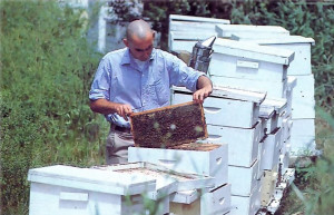 Five tons of honey a year come from fifty hives