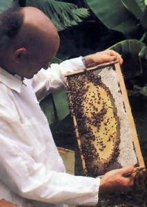 His Holiness Narahari Swami checks honey production at one of the hives.