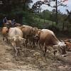 Farm Report
