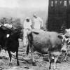 New Vrndavana: The West's First Krsna Conscious Community