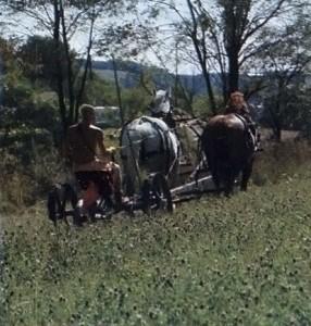Hare Krishna Devotee Ploughs Land with Horses