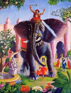 The caretaker provoked the elephant to try to kill Lord Krishna.