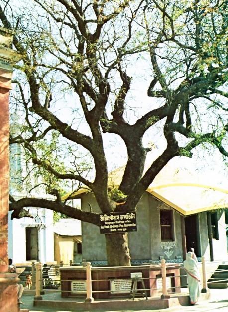 The birthplace of Lord Sri Caitanya Mahaprabhu