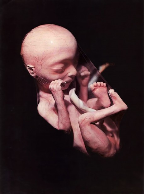 Life in the Womb, and embryo in the womb.