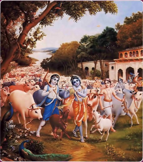 Krishna was very pleased with the atmosphere of the Vrndavana forest, where flowers bloomed and bees and drones hummed jubilantly. While the birds, trees, and branches were all looking very happy, Krishna, tending the cows and accompanied by Sri Balarama and the cowherd boys, began to vibrate His transcendental flute. When the cowherd girls of Vrndavana heard the sweet vibration, they began to talk among themselves about how nicely Krishna was playing His flute. They also described how Krishna dressed, decorated with a peacock feather on His head (just like a dancing actor) and with blue flowers pushed over His ear. His garment glowed yellow-gold, and He wore a vaijayanti garland around His neck. Dressed in such an attractive way, Krishna filled up the holes of His flute with the nectar emanating from His lips. So the cowherd girls remembered Him entering the Vrndavana forest, which is always glorified by the footprints of Krishna and His companions.