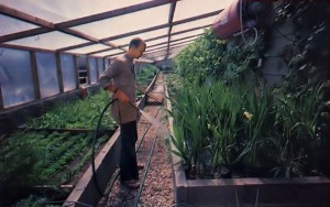 Haribolinanda waters new plants and flowers at iSKCON's New Mayapur Farm in France. 1976.