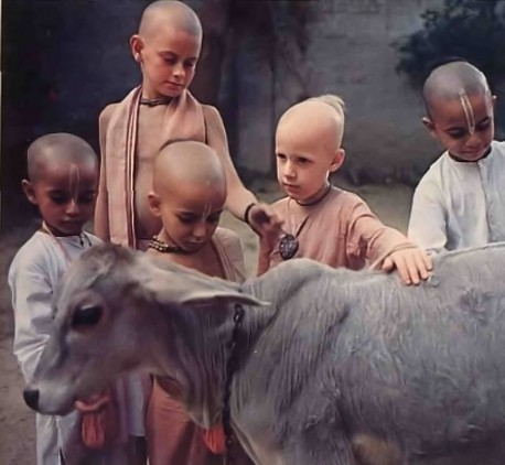 The boys look on the cow as their mother--her milk gives them the intelligence they'll need to become brahmanas, spiritual leaders. And in a world rife with cow slaughter and spiritual ignorance, they await the day when everyone bows to Krishna the protector of the cows and brahmanas and the real leader of us all.