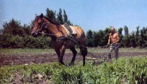 1978-07-16