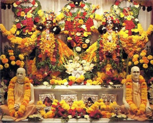 Their produce in the temple - through Srila Prabhupada and his spiritual master (lower altar) to Krsna, in the form of Sri Caitanya Mahaprabhu and Sri Nityananda Prabhu (upper altar).