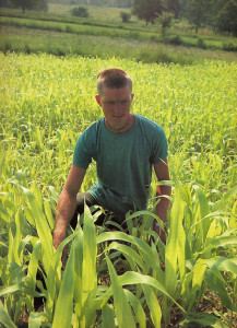 Sorghum  yields a sweet syrup that replaces sugar. The crushed stalks become fodder.