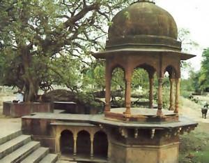 A kadamba tree marks the spot where Krsna battled Kaliya