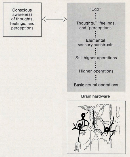 Fig. 4. The relation between consciousness and the physical structures of the brain. Both the contents of consciousness and the physical structures are real, but the contents of consciousness can correspond only to higher·order abstract properties of these structures. As in Figure 3, these properties a re represented by the hierarchy of symbolic descriptions enclosed within the tinted section.