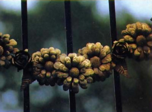 Detail from wrought-iron gates at the Palace shows the skill of devotee craftspeople.
