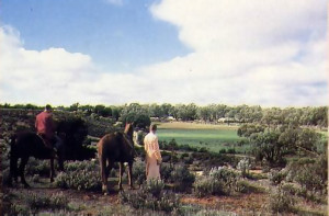 Horses are ideal for getting a round vast new Australian farm.