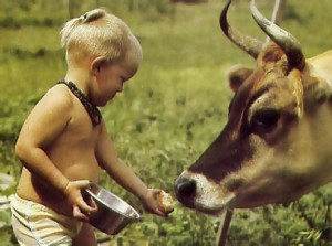playfully feeding a cow some leftovers