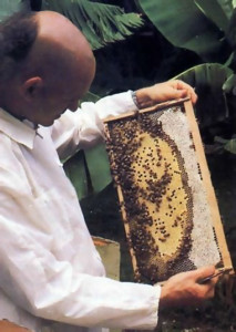 His Holiness Narahari Swami checks honey production at one of the hives.