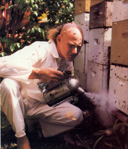 Smoking the hives triggers a honey-gorging reflex in the bees, who then become sluggish and easier to handle.