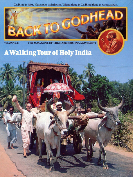 Riding on an ox cart , deities of Srila Prabhupada and Lord Cairanya and Lord Nityananda are the inspirational nucleus of one of recent history's most ambitious walking pilgrimages.
